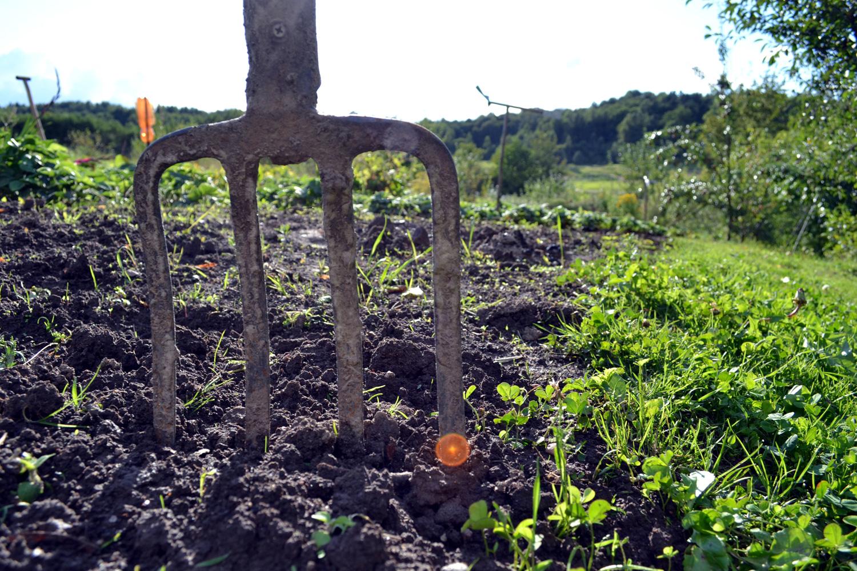eden garden the soil
