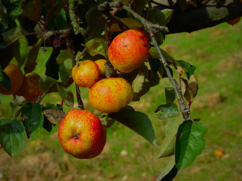 fruituak kolore