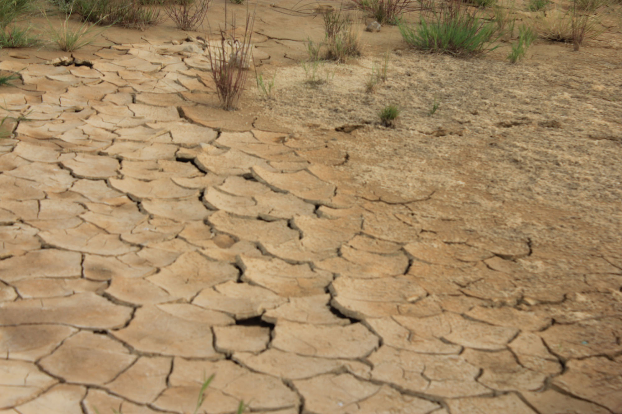 desierto y vegetacion